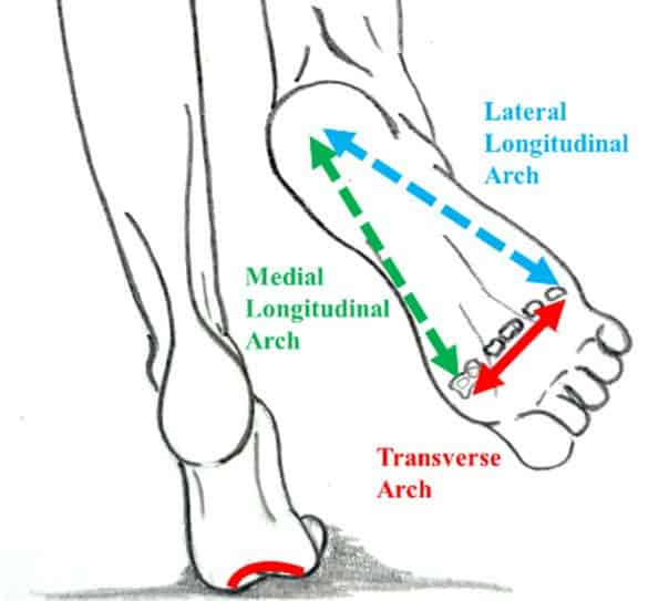 arches of the foot pilates