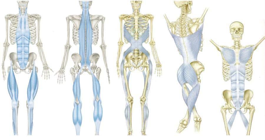 myofascial slings